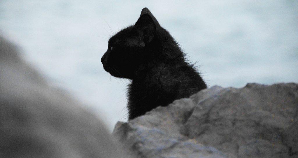 friday-black-cat